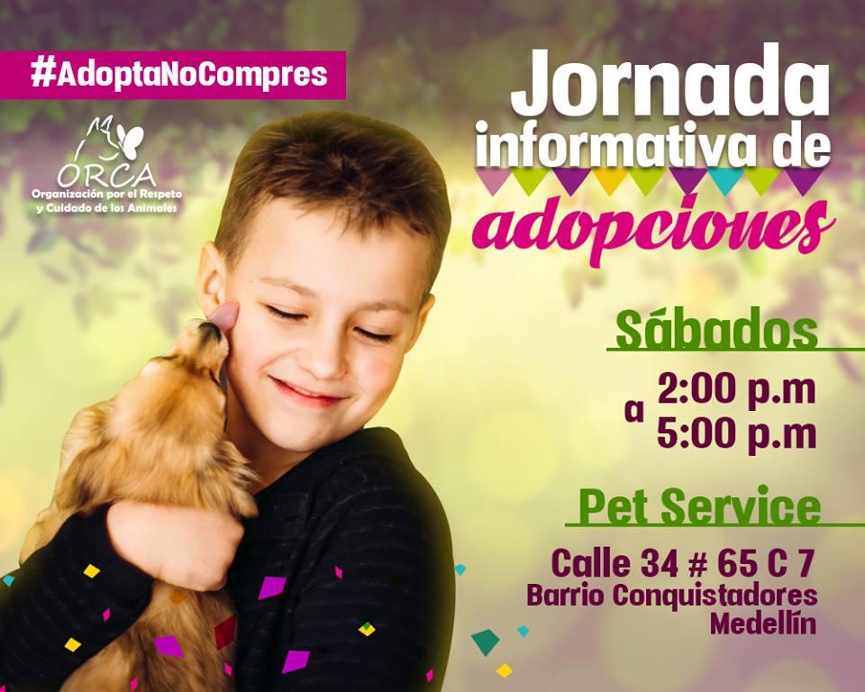 adopciones_906967.jpeg
